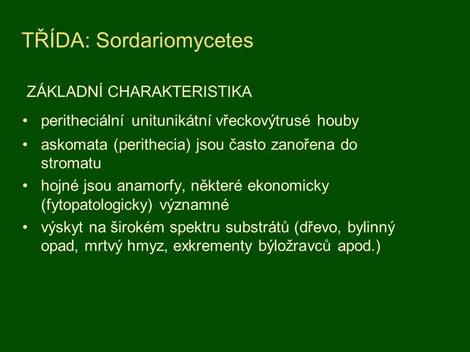 TŘÍDA: Sordariomycetes