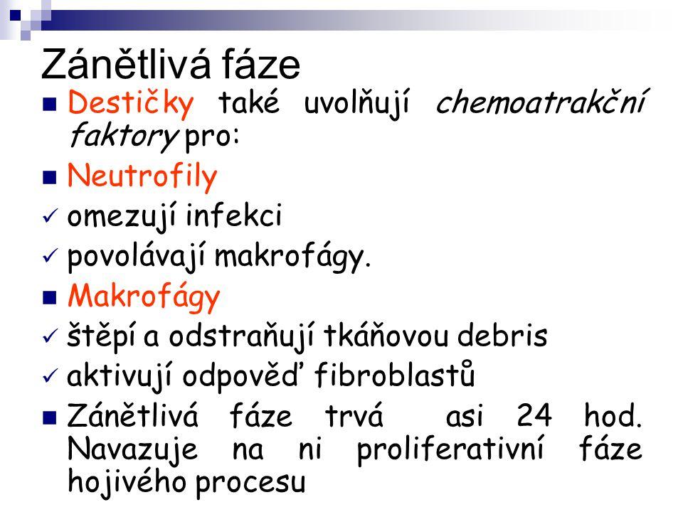 Zánětlivá fáze Destičky také uvolňují chemoatrakční faktory pro: