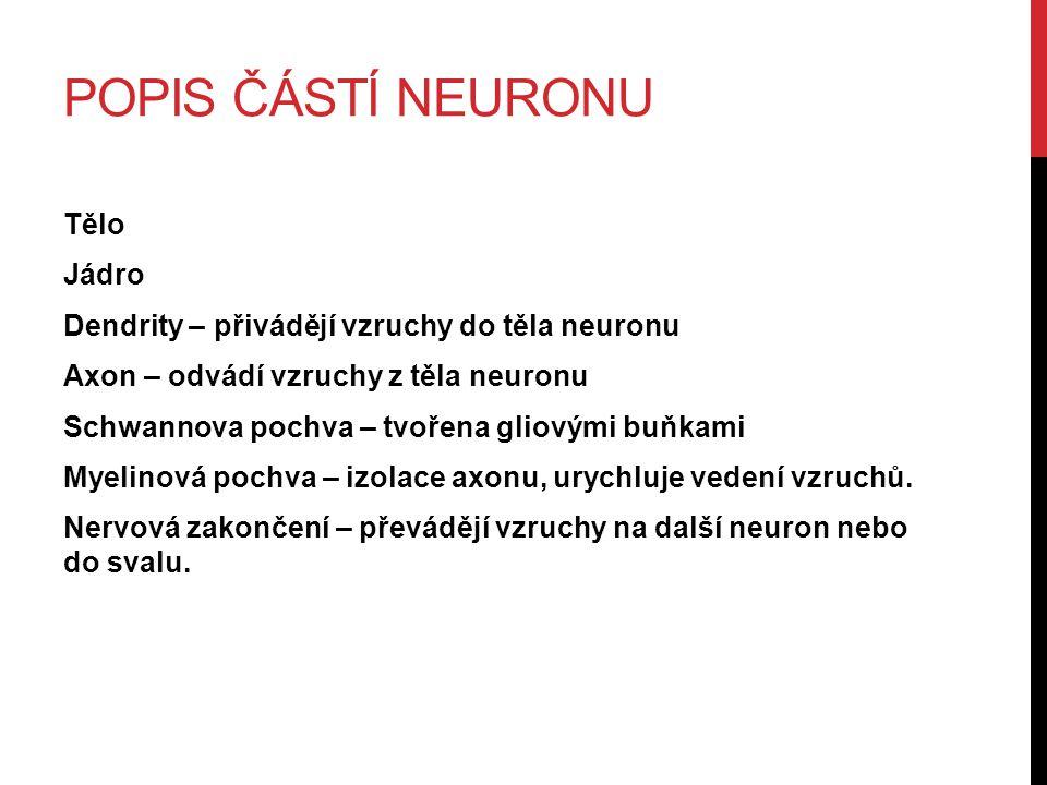 Popis částí neuronu