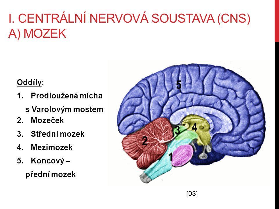I. Centrální nervová soustava (cns) A) mozek