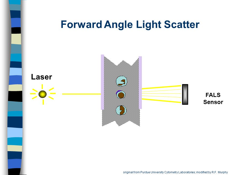 Forward Angle Light Scatter