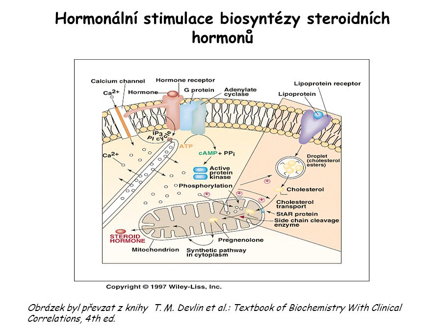 Hormonální stimulace biosyntézy steroidních hormonů