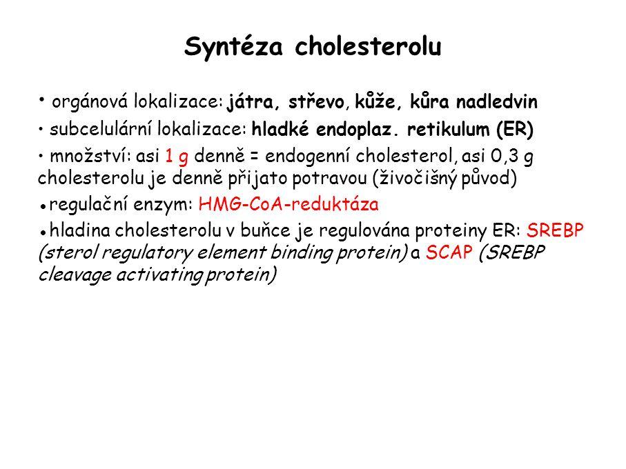 Syntéza cholesterolu orgánová lokalizace: játra, střevo, kůže, kůra nadledvin. subcelulární lokalizace: hladké endoplaz. retikulum (ER)