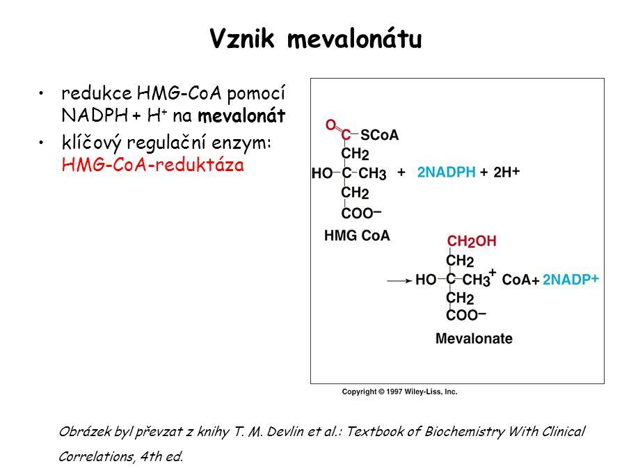 Vznik mevalonátu redukce HMG-CoA pomocí NADPH + H+ na mevalonát