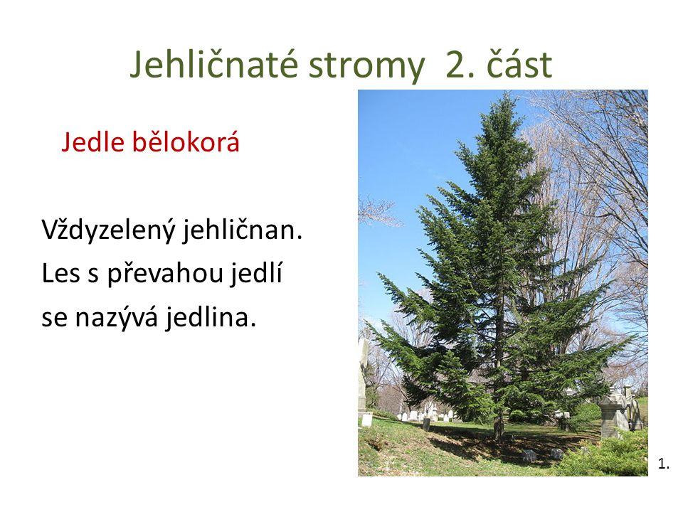 Jehličnaté stromy 2. část