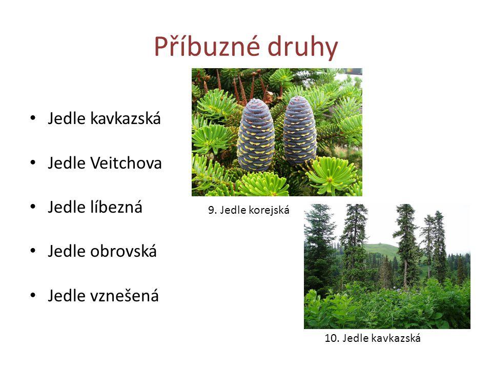 Příbuzné druhy Jedle kavkazská Jedle Veitchova Jedle líbezná