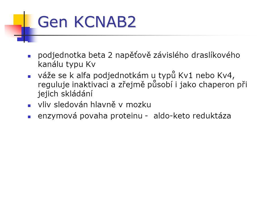 Gen KCNAB2 podjednotka beta 2 napěťově závislého draslíkového kanálu typu Kv.