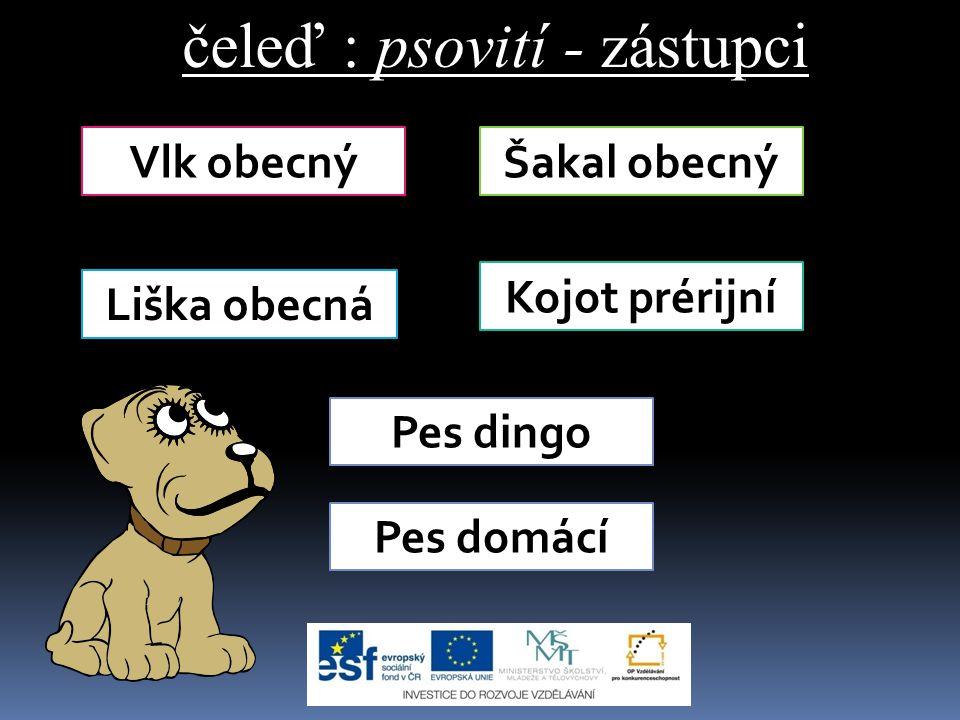 čeleď : psovití - zástupci