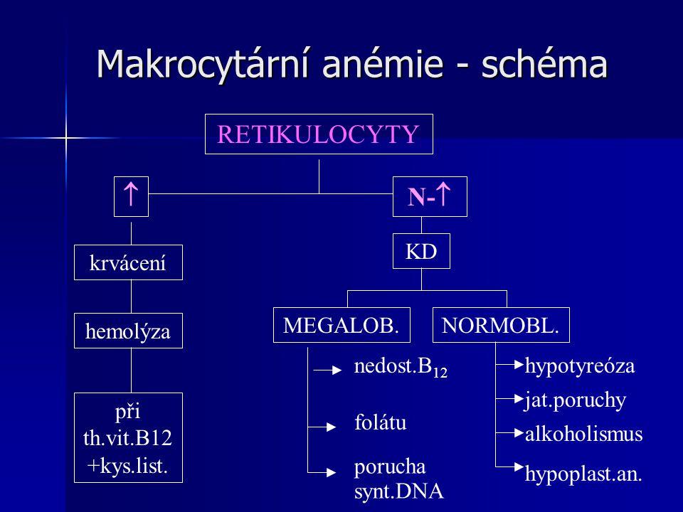 Makrocytární anémie - schéma