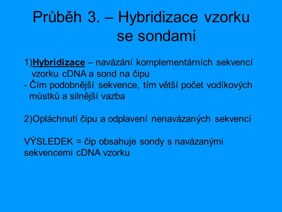 Průběh 3. – Hybridizace vzorku se sondami