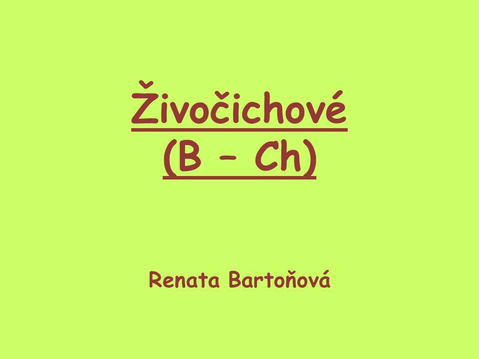 Živočichové (B – Ch) Renata Bartoňová