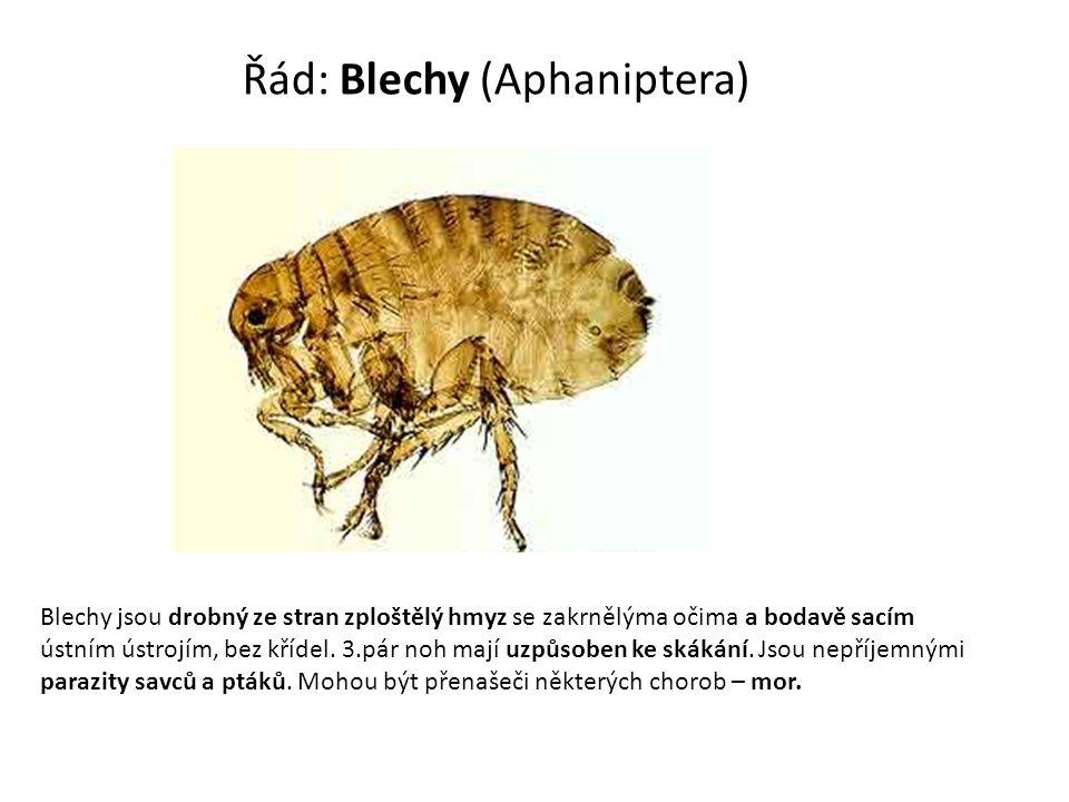 Řád: Blechy (Aphaniptera)