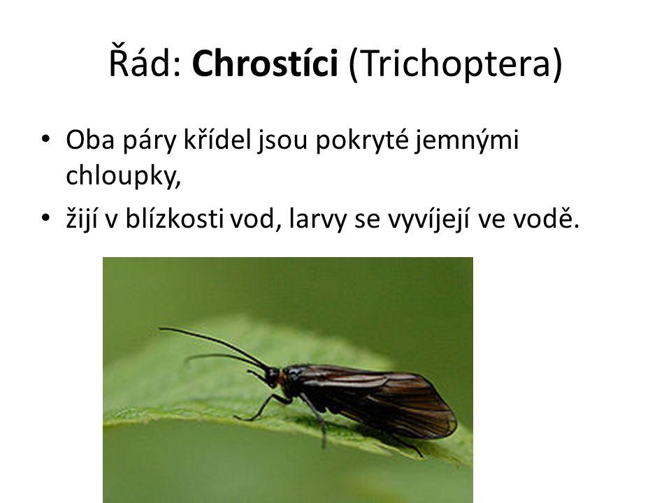 Řád: Chrostíci (Trichoptera)