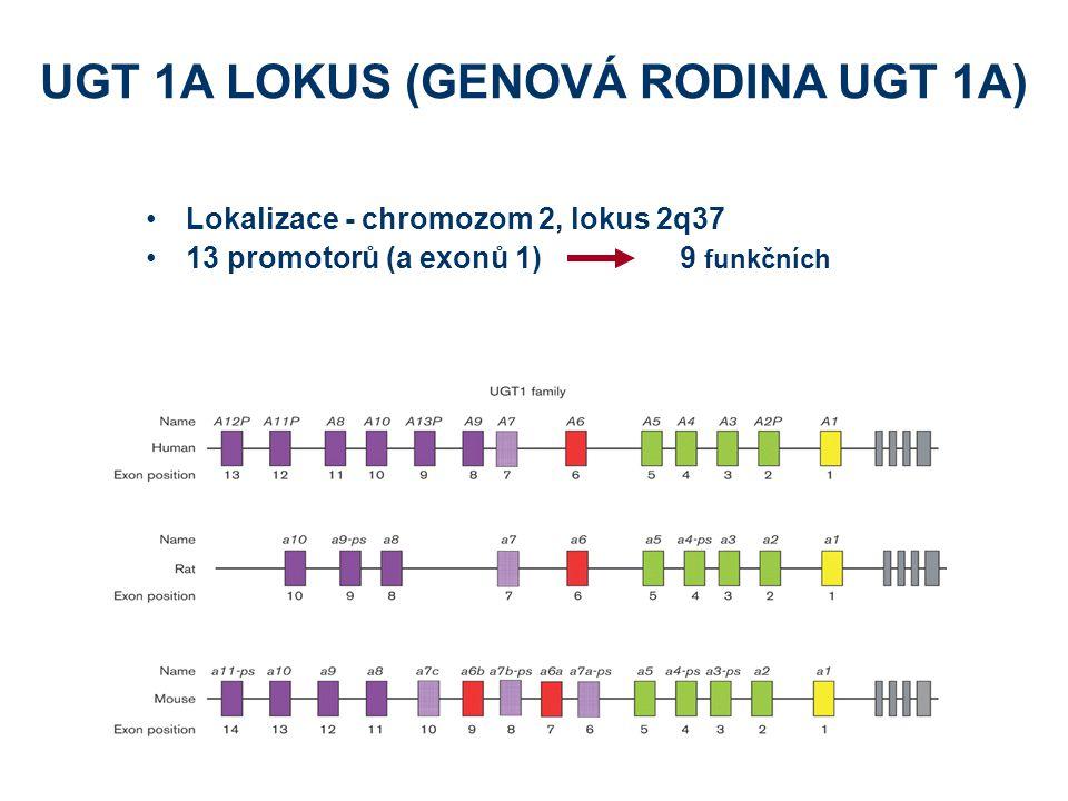 UGT 1A LOKUS (GENOVÁ RODINA UGT 1A)