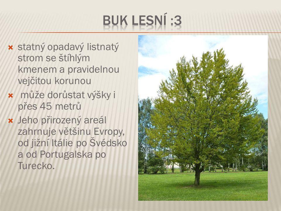 Buk lesní :3 statný opadavý listnatý strom se štíhlým kmenem a pravidelnou vejčitou korunou. může dorůstat výšky i přes 45 metrů.