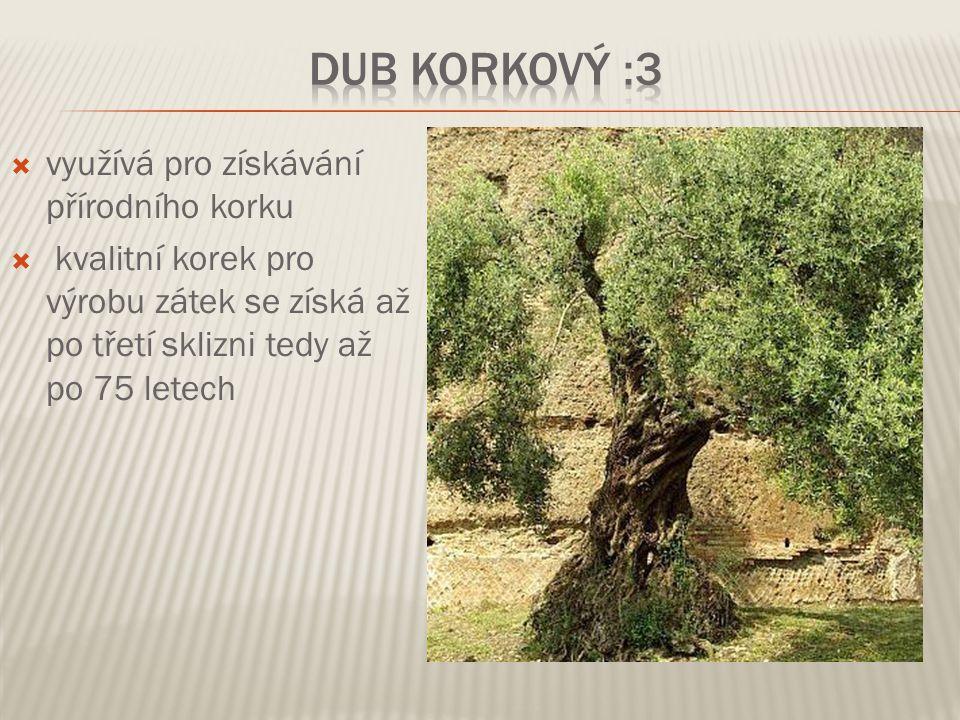 Dub korkový :3 využívá pro získávání přírodního korku