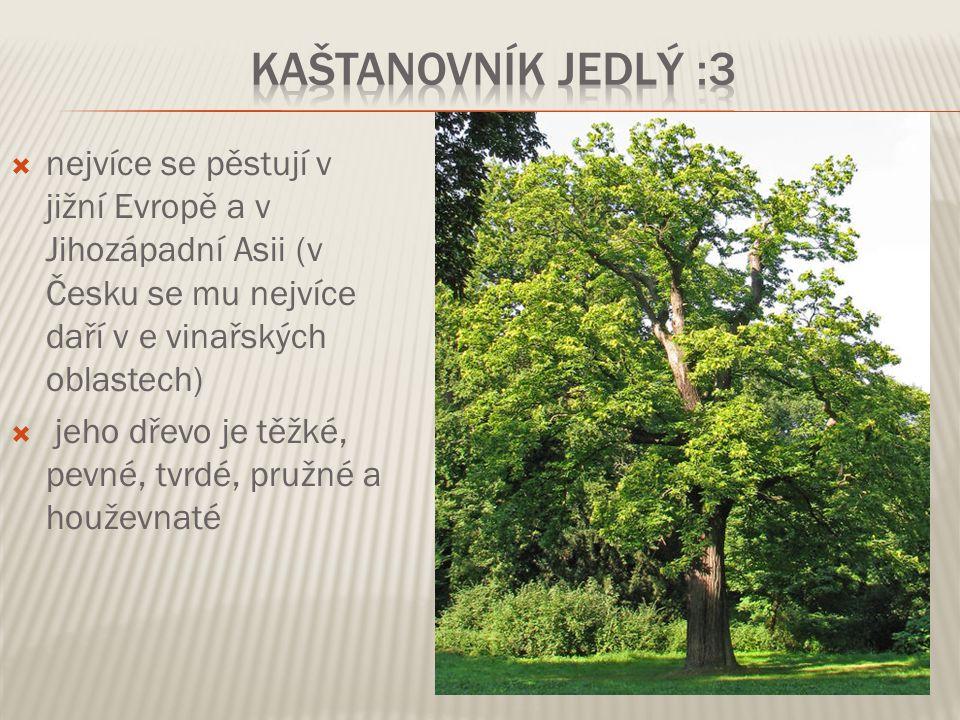 Kaštanovník jedlý :3 nejvíce se pěstují v jižní Evropě a v Jihozápadní Asii (v Česku se mu nejvíce daří v e vinařských oblastech)