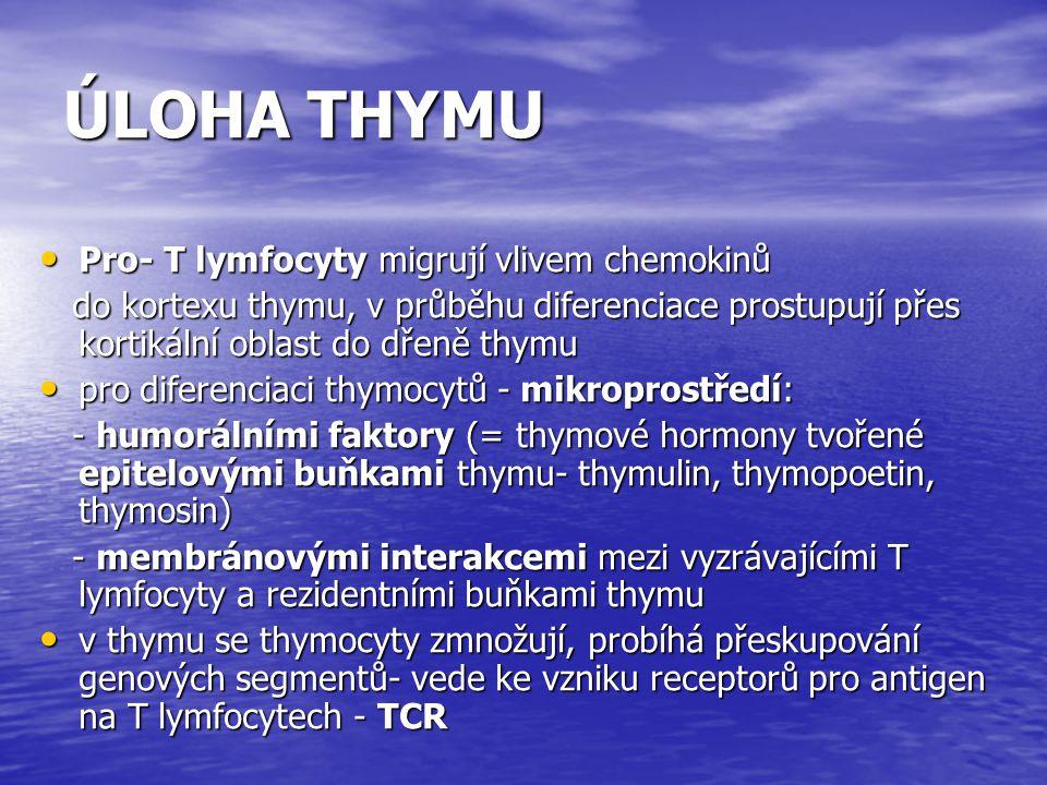 ÚLOHA THYMU Pro- T lymfocyty migrují vlivem chemokinů