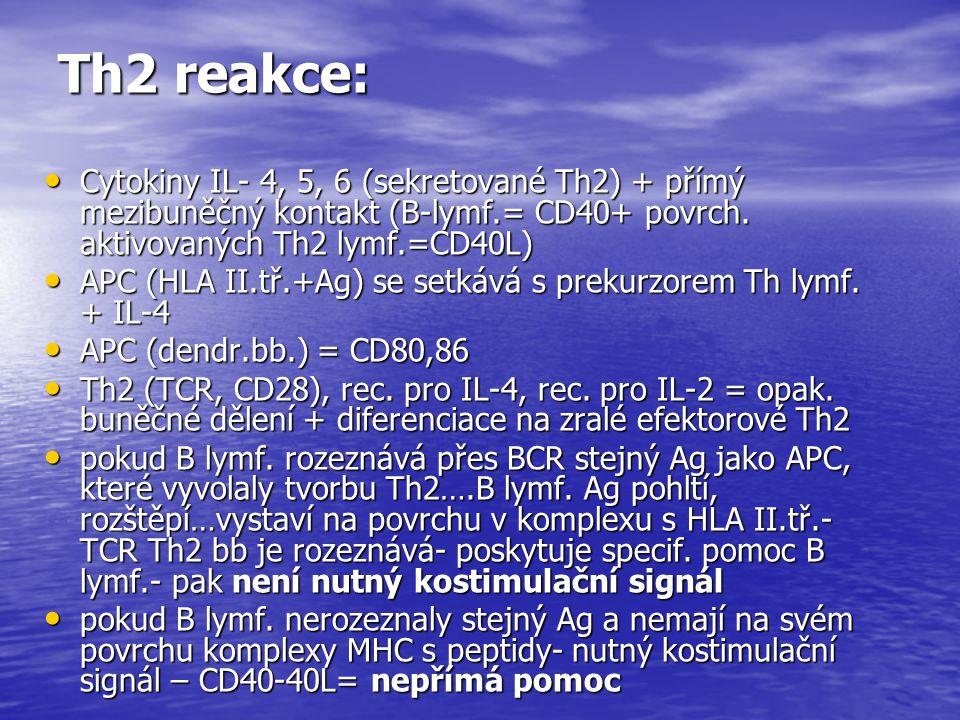 Th2 reakce: Cytokiny IL- 4, 5, 6 (sekretované Th2) + přímý mezibuněčný kontakt (B-lymf.= CD40+ povrch. aktivovaných Th2 lymf.=CD40L)