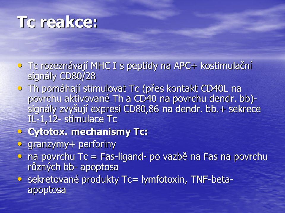 Tc reakce: Tc rozeznávají MHC I s peptidy na APC+ kostimulační signály CD80/28.