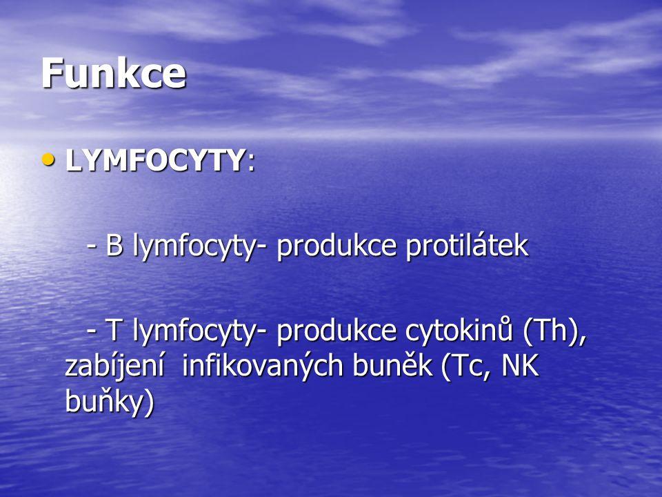 Funkce LYMFOCYTY: - B lymfocyty- produkce protilátek