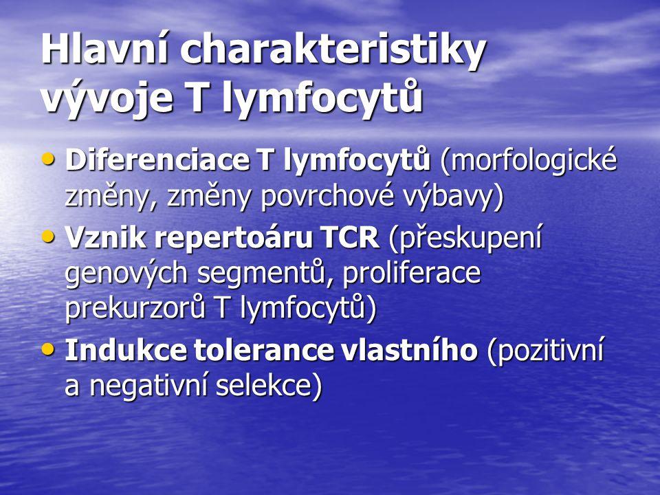 Hlavní charakteristiky vývoje T lymfocytů