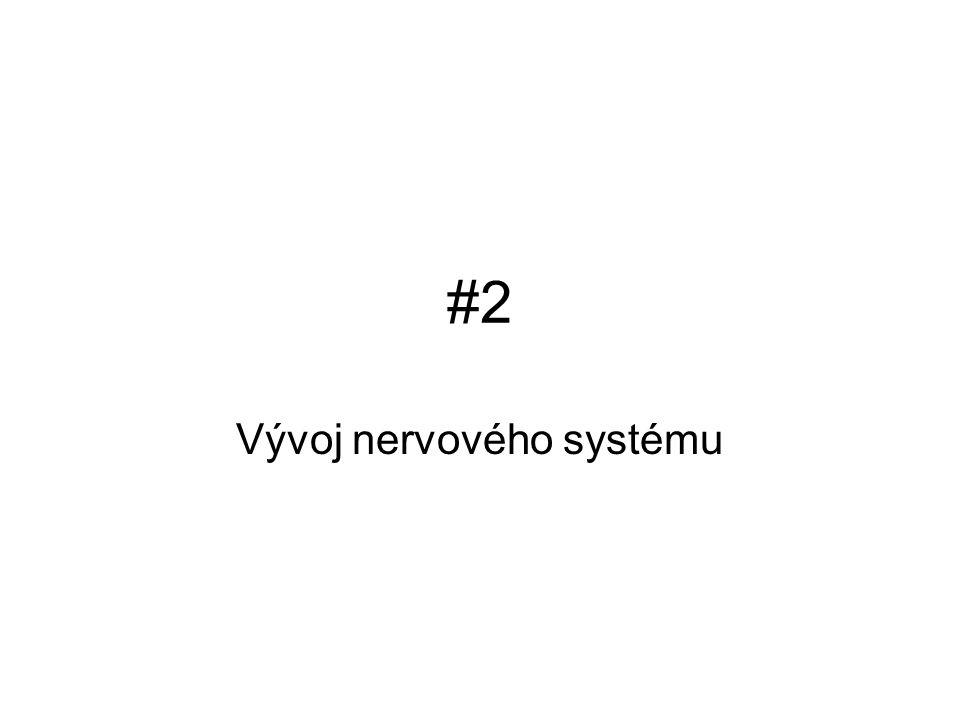 Vývoj nervového systému