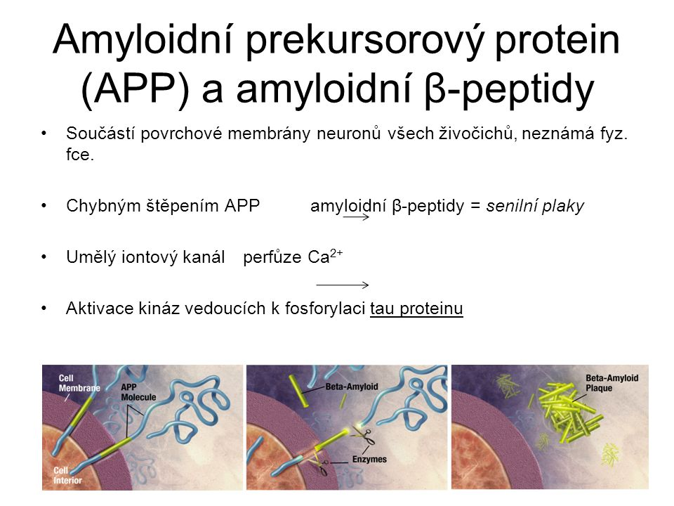 Amyloidní prekursorový protein (APP) a amyloidní β-peptidy