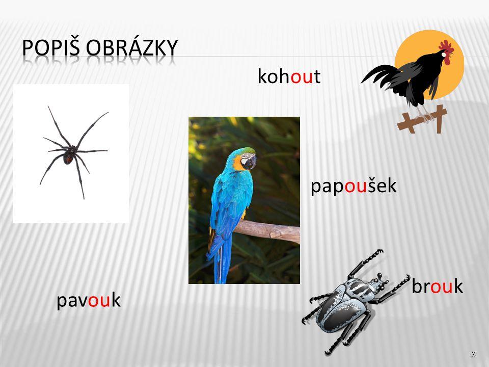 Popiš obrázky kohout papoušek brouk pavouk