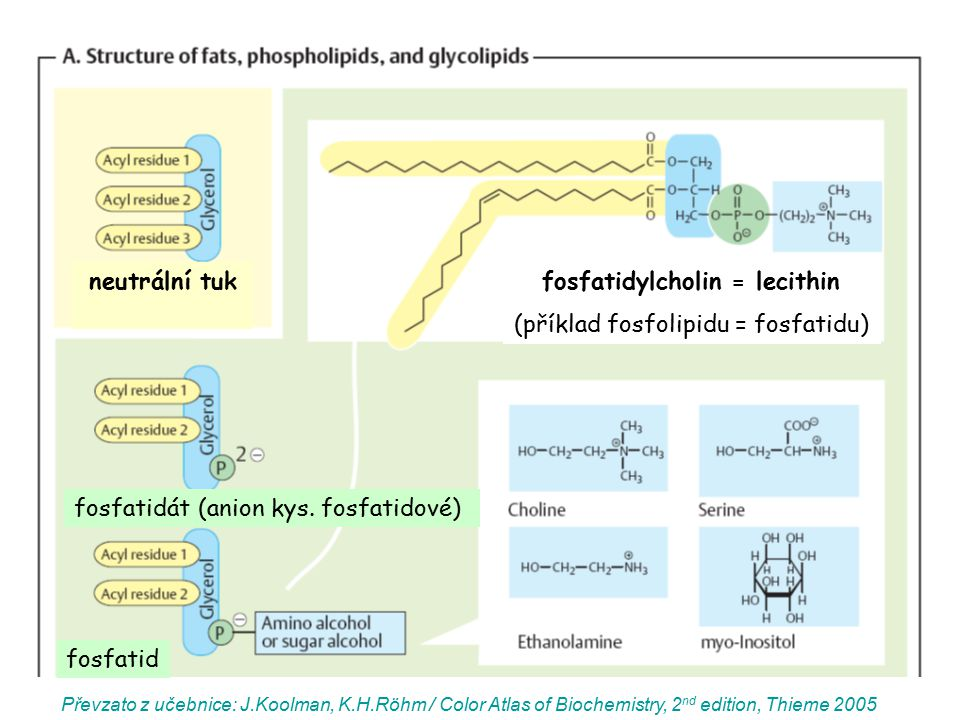 fosfatidylcholin = lecithin