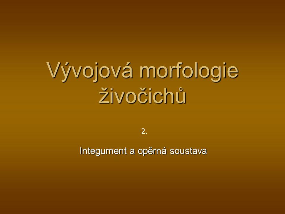 Vývojová morfologie živočichů