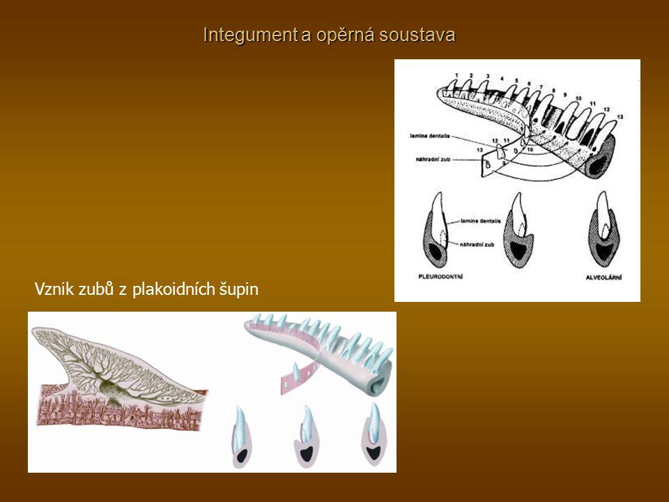 Integument a opěrná soustava