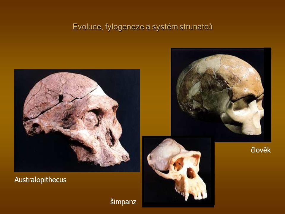 Evoluce, fylogeneze a systém strunatců