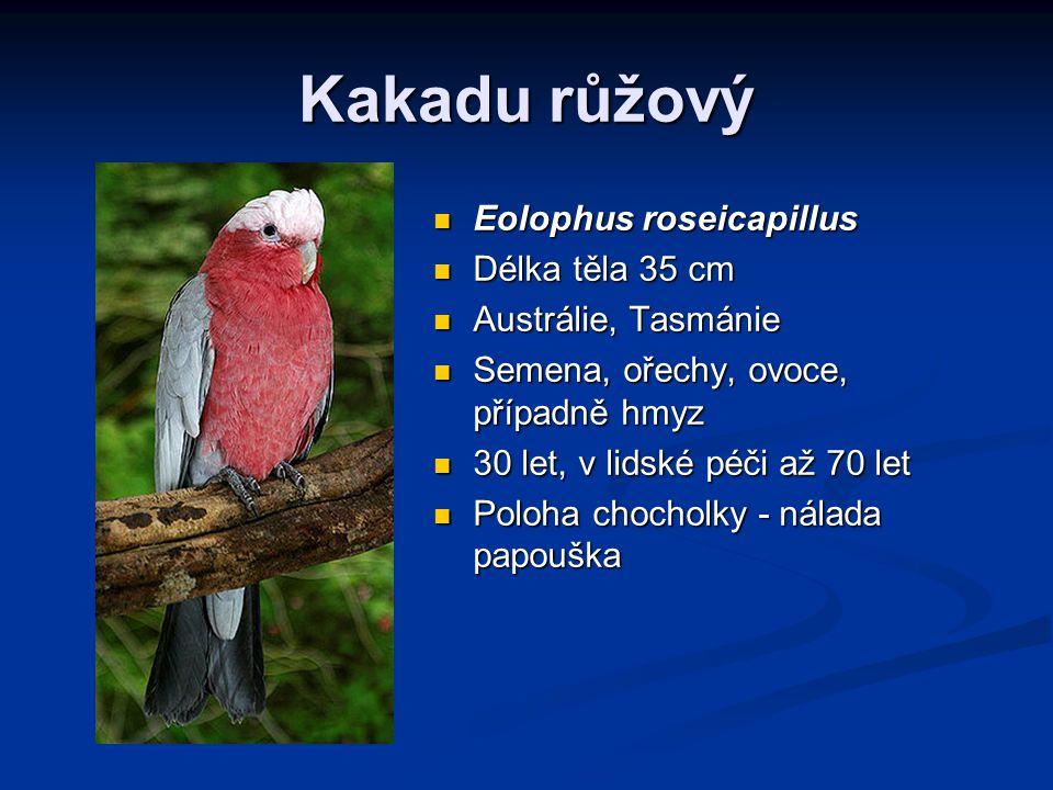 Kakadu růžový Eolophus roseicapillus Délka těla 35 cm