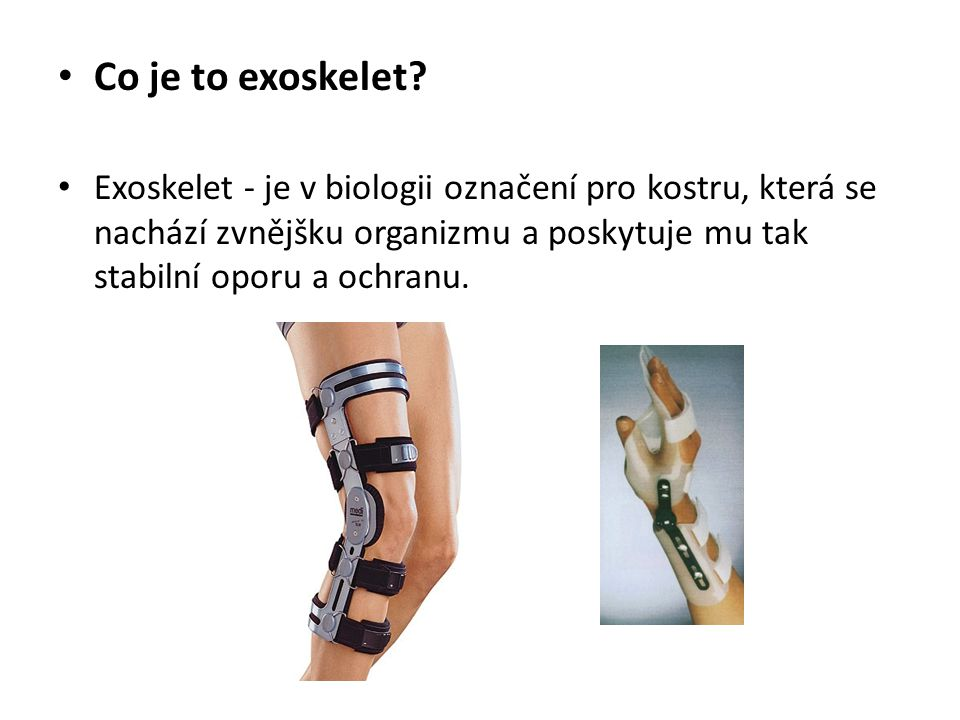Co je to exoskelet.