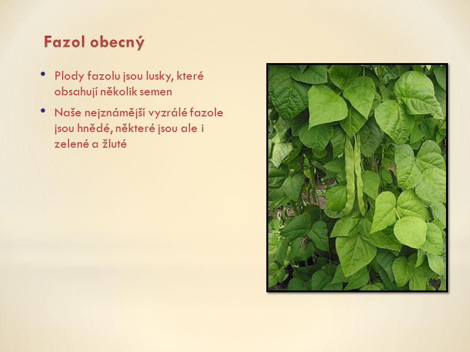 Fazol obecný Plody fazolu jsou lusky, které obsahují několik semen