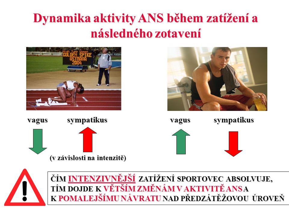 Dynamika aktivity ANS během zatížení a následného zotavení