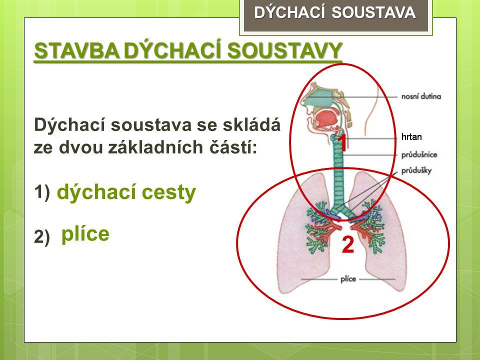 1 STAVBA DÝCHACÍ SOUSTAVY dýchací cesty plíce