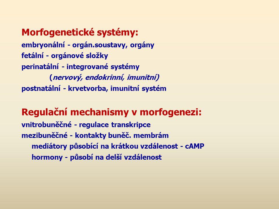 Morfogenetické systémy: