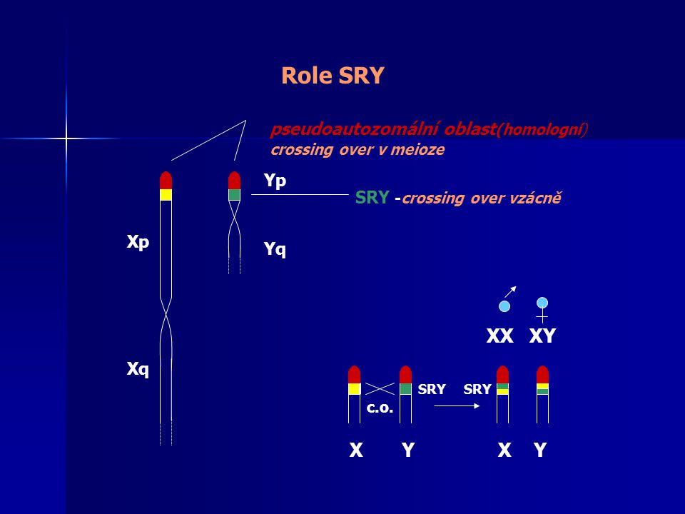 Role SRY XX XY X Y X Y pseudoautozomální oblast(homologní) Yp