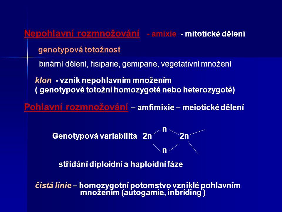 Nepohlavní rozmnožování - amixie - mitotické dělení