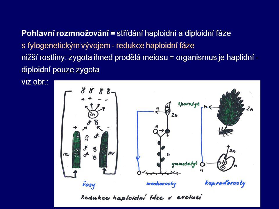 Pohlavní rozmnožování = střídání haploidní a diploidní fáze