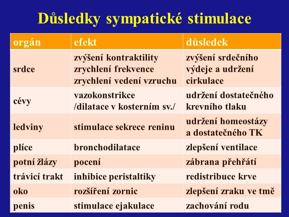 Důsledky sympatické stimulace