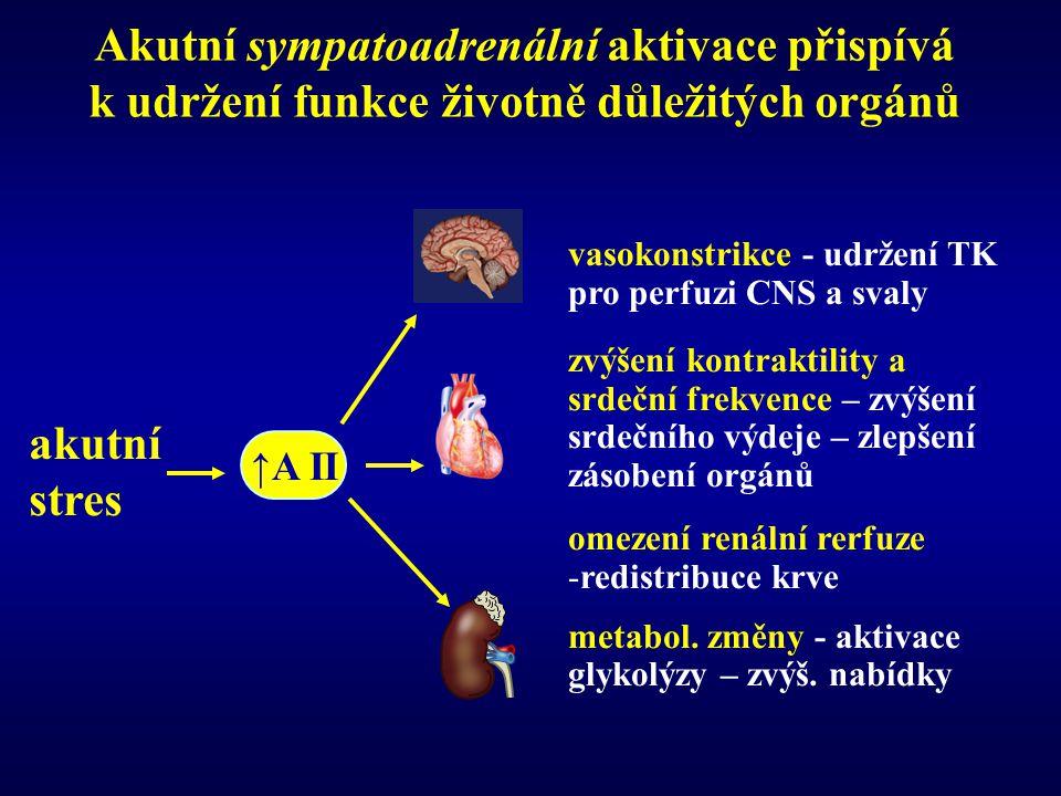 Akutní sympatoadrenální aktivace přispívá k udržení funkce životně důležitých orgánů
