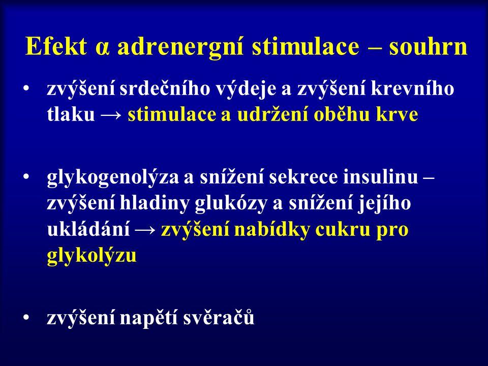 Efekt α adrenergní stimulace – souhrn