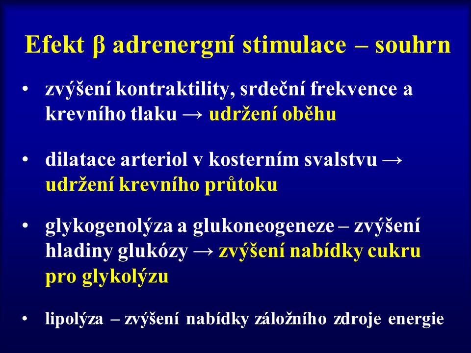 Efekt β adrenergní stimulace – souhrn