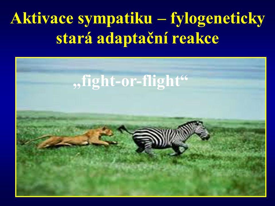 Aktivace sympatiku – fylogeneticky stará adaptační reakce