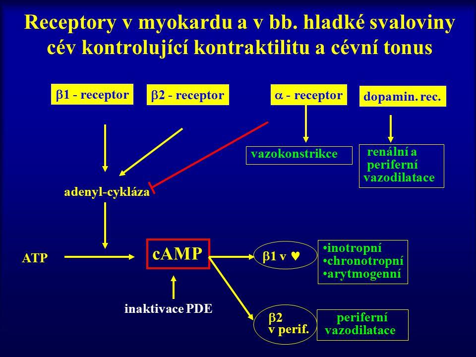Receptory v myokardu a v bb