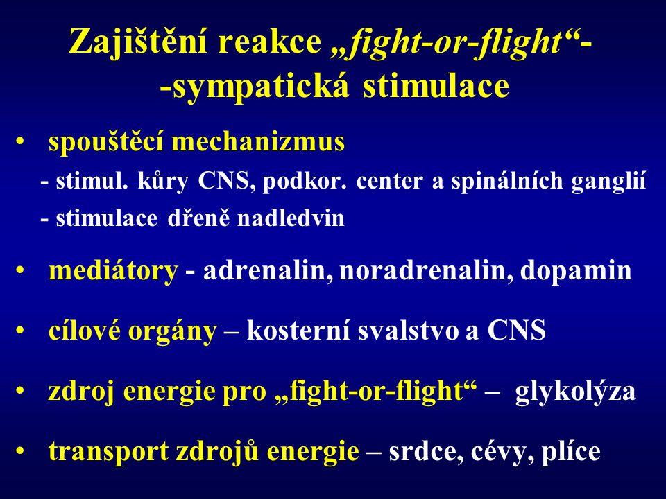 """Zajištění reakce """"fight-or-flight - -sympatická stimulace"""