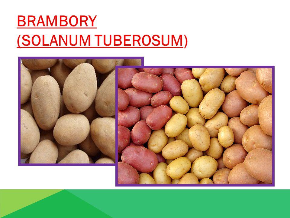 BRAMBORY (SOLANUM TUBEROSUM) BRAMBORY ( SOLANUM TUBEROSUM)